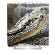 Coiled In Wait Shower Curtain