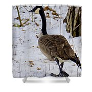 Cold Footed Goose On The Loose Shower Curtain