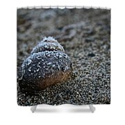 Cold Shell Shower Curtain