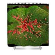 Colius Leaf Shower Curtain