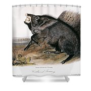 Collared Peccary, 1846 Shower Curtain