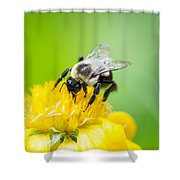 Collecting Shower Curtain