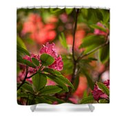 Color In The Jungle Shower Curtain