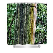 Color Of The Trees Shower Curtain