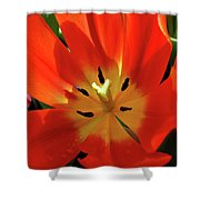 Color Wheel Of Light Shower Curtain