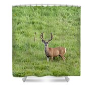 Colorado Deer Shower Curtain