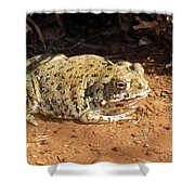 Colorado River Toad Shower Curtain