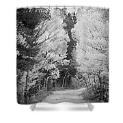 Colorado Rocky Mountain Aspen Road Portrait Bw Shower Curtain
