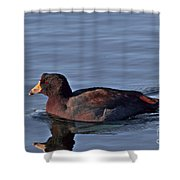Colorful American Coot Shower Curtain