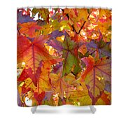 Colorful Autumn Leaves Art Prints Trees Shower Curtain
