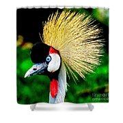 Colorful Bird Shower Curtain
