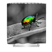Colorful Bug Shower Curtain