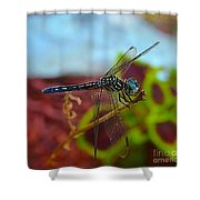 Colorful Dragon Fly Shower Curtain