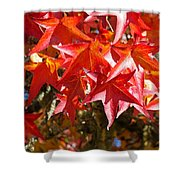 Colorful Fall Tree Red Leaves Art Prints Shower Curtain