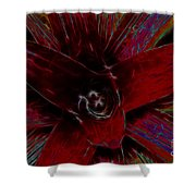 colorful Frond Shower Curtain