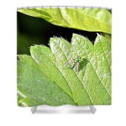 Colorful Garden Fly 2 Shower Curtain