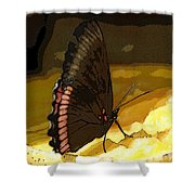Colorful Hairstreak Shower Curtain