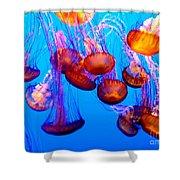 Colorful Jellies Shower Curtain by Ellen Heaverlo