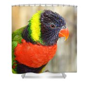 Colorful Lorikeet Parrot Shower Curtain