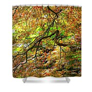 Colorful Maple Leaves Shower Curtain