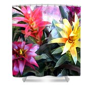 Colorful Mixed Bromeliads Shower Curtain