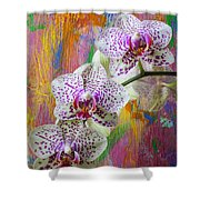 Colorful Orchids Shower Curtain