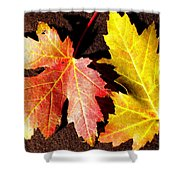 Colorful Pair Shower Curtain