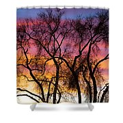 Colorful Silhouetted Trees 26 Shower Curtain