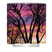 Colorful Silhouetted Trees 33 Shower Curtain