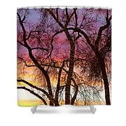 Colorful Silhouetted Trees 37 Shower Curtain