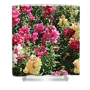 Colorful Snapdragons In San Antonio Shower Curtain