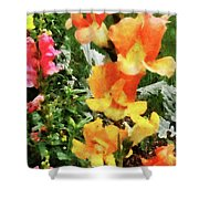 Colorful Snapdragons Shower Curtain