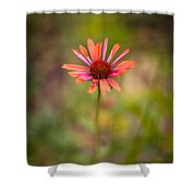 Colorful Stand Shower Curtain