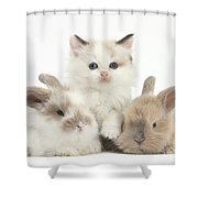 Colorpoint Kitten With Baby Rabbits Shower Curtain