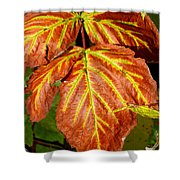 Colors And Veins Shower Curtain