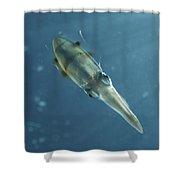 Colourful Squid, North Sulawesi Shower Curtain by Mathieu Meur