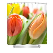 Colourful Tulips Shower Curtain