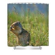 Columbia Ground Squirrel Feeding Shower Curtain