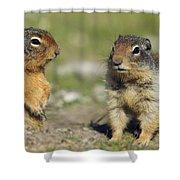 Columbian Ground Squirrels, Banff Shower Curtain