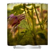 Columbine - Flower Of Spring Shower Curtain
