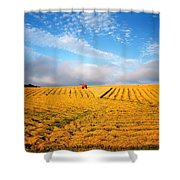 Combine Harvesting, Wheat, Ireland Shower Curtain