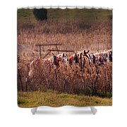 Combining Soybeans Shower Curtain