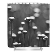 Coming Up Daisies Abstract In Black And White Shower Curtain
