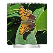 Comma Anglewing Butterfly - Polygonia C-album Shower Curtain