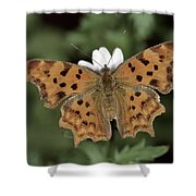 Comma Polygonia C-album, Germany Shower Curtain