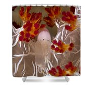 Commensal Shrimp On Soft Coral In Raja Shower Curtain