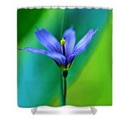 Common Blue Eyed Grass Sisyrinchium Shower Curtain
