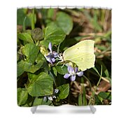 Common Brimstone Shower Curtain