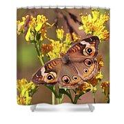 Common Buckeye  Shower Curtain