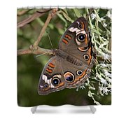 Common Buckeye Butterfly Din182 Shower Curtain